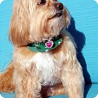 Adopt A Pet :: DOLLY - Suffolk, VA