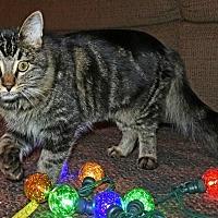 Adopt A Pet :: Gracie - Rosamond, CA