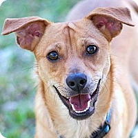 Adopt A Pet :: Fred - San Antonio, TX