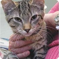 Adopt A Pet :: Suzanne - Colmar, PA