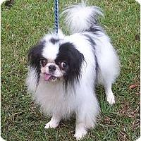 Adopt A Pet :: Oreo - Okatie, SC