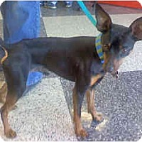 Adopt A Pet :: Jasper - Scottsdale, AZ