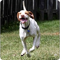 Adopt A Pet :: Donneigh - Columbus, OH