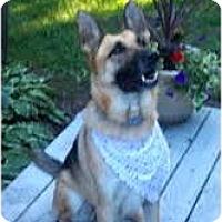 Adopt A Pet :: LUPE - Minnetonka, MN