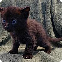 Adopt A Pet :: Leonard - Florence, KY