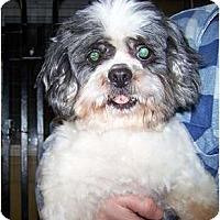 Adopt A Pet :: Vlad WONDERFUL COMPANION - Antioch, IL