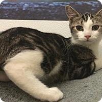 Adopt A Pet :: Falon - Hamburg, NY