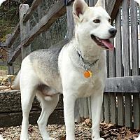 Adopt A Pet :: Sampson - Staunton, VA
