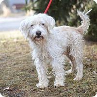 Adopt A Pet :: Rambo - Springfield, IL