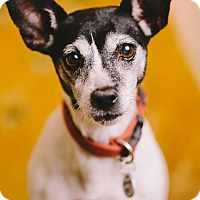 Adopt A Pet :: Mongs - Portland, OR