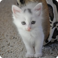 Adopt A Pet :: Lilly - Modesto, CA