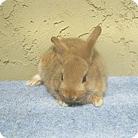 Adopt A Pet :: Baby3 - Bonita, CA