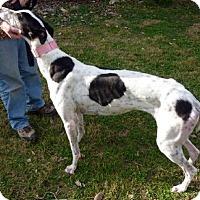 Adopt A Pet :: Tess - Spencerville, MD