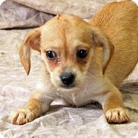 Adopt A Pet :: Kukumber - Modesto, CA