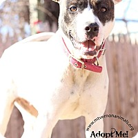Adopt A Pet :: Blonde - Mt Vernon, NY