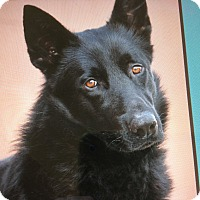 Adopt A Pet :: LYRIC VON BERKUN - Los Angeles, CA