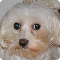 Adopt A Pet :: Metro - Prole, IA