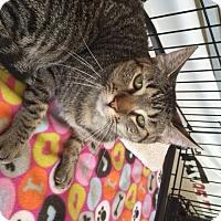 Adopt A Pet :: Bridget - San Antonio, TX