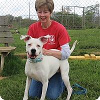 Adopt A Pet :: Lola - Elyria, OH