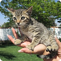 Adopt A Pet :: Stabler - San Bernardino, CA