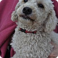 Adopt A Pet :: Jasper - Palmdale, CA