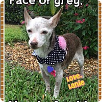 Adopt A Pet :: Lanie - Wellington, FL
