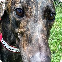 Adopt A Pet :: Crazy Diamond - Longwood, FL