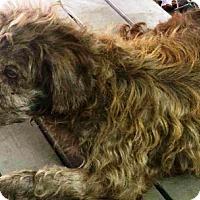 Adopt A Pet :: Ashby - Oswego, IL