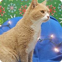 Adopt A Pet :: Bob - Bucyrus, OH
