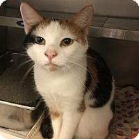 Adopt A Pet :: Carmen - Saginaw, MI