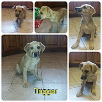 Adopt A Pet :: Trigger IN CT - Manchester, CT