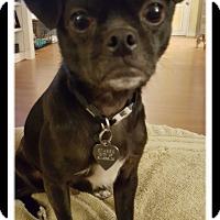 Adopt A Pet :: MONTY - Winchester, CA