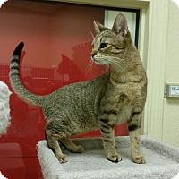 Adopt A Pet :: Gilly - Phoenix, AZ