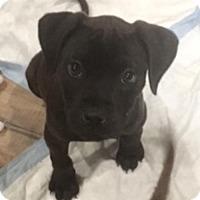 Adopt A Pet :: JB Heidi - San Diego, CA