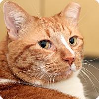 Adopt A Pet :: CLYDE - Royal Oak, MI
