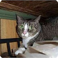 Adopt A Pet :: Heather - North Plainfield, NJ