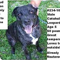 Adopt A Pet :: # 234-10 - ADOPTED! - Zanesville, OH