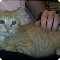 Adopt A Pet :: Lawrence - Reston, VA