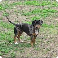 Adopt A Pet :: Admiral - Wahoo, NE