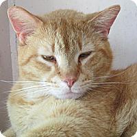 Adopt A Pet :: Felix - Plattekill, NY