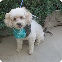 Adopt A Pet :: **MURPHY** - Stockton, CA