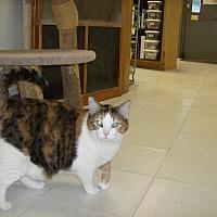 Adopt A Pet :: Cassie - Milwaukee, WI