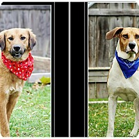 Adopt A Pet :: Jake and Rex - Delaware, OH