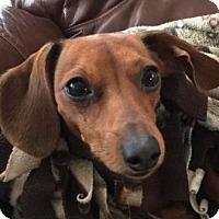 Adopt A Pet :: PEACHES - Portland, OR