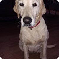 Adopt A Pet :: Olivia - Warrenton, NC