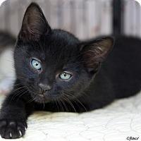 Adopt A Pet :: Gene - St Louis, MO