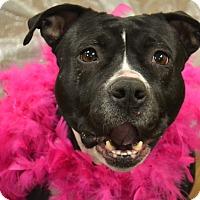 Terrier (Unknown Type, Medium) Mix Dog for adoption in Lake Odessa, Michigan - Shasta
