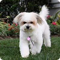 Adopt A Pet :: PUTNAM - Newport Beach, CA