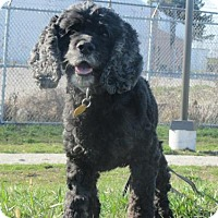 Adopt A Pet :: Snickers - Toronto, ON