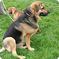 Adopt A Pet :: Zoe - Shelter Island, NY
